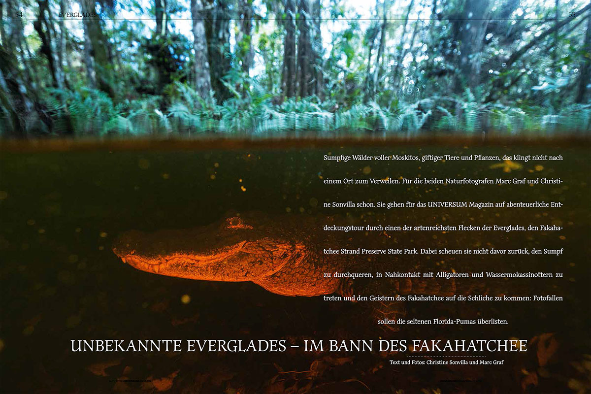 15_Everglades