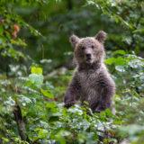 Slowenien- Bären, Höhlen und Wälder