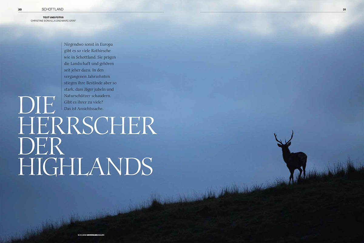 11_Hirsche_Schottland