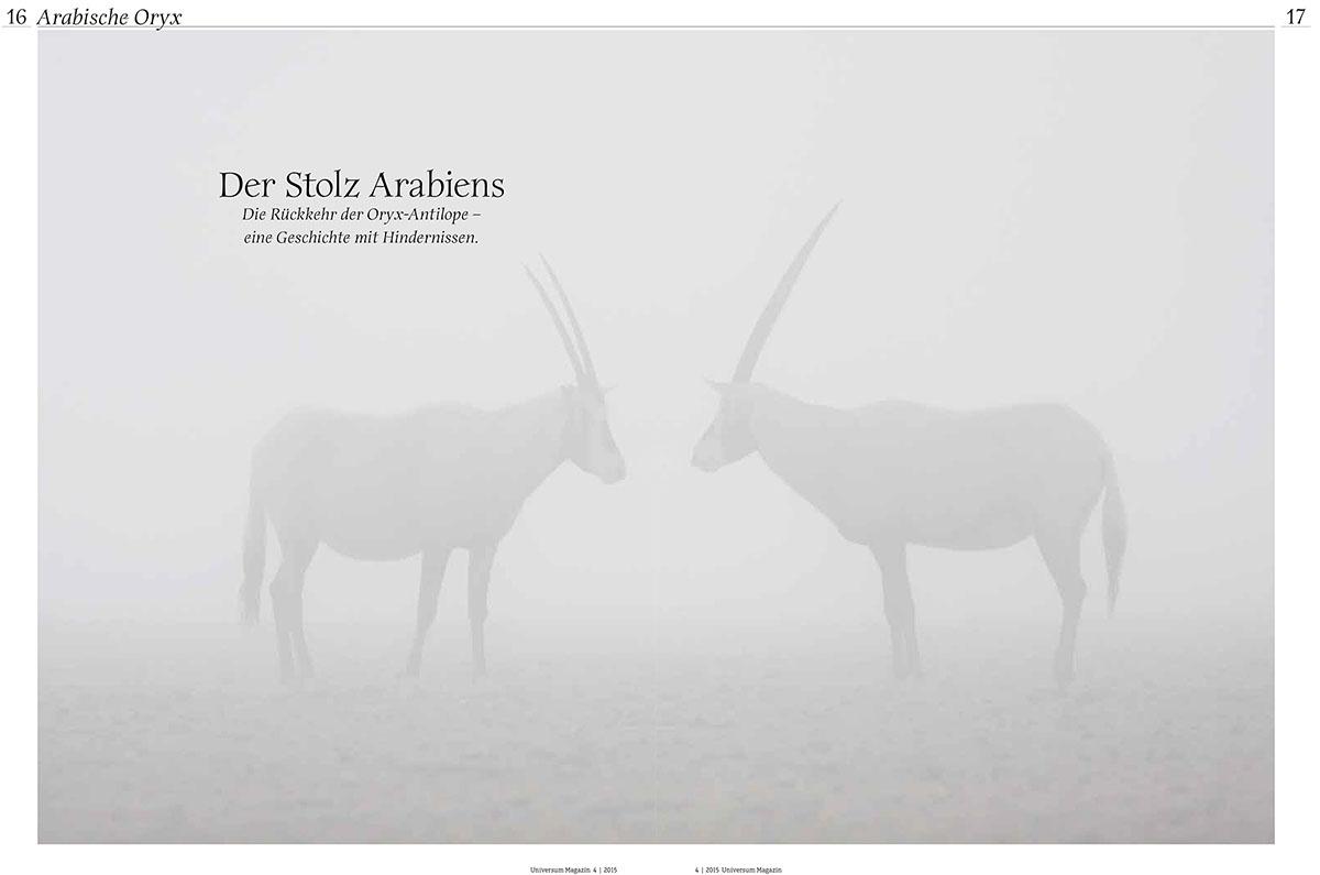 17_Oryx_Oman